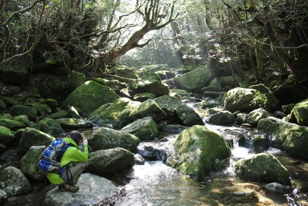 苔むす渓谷・屋久島白谷雲水峡