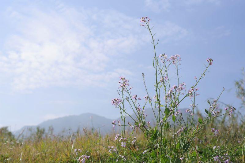 PENTAX K-1とD FA★50mm F1.4屋久島風景写真