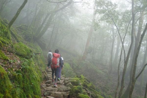 屋久島白谷雲水峡ツアー霧の景色