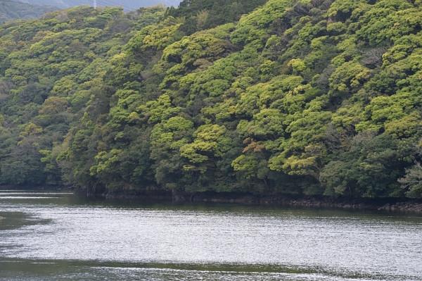 屋久島の照葉樹林をカヤックで楽しむ