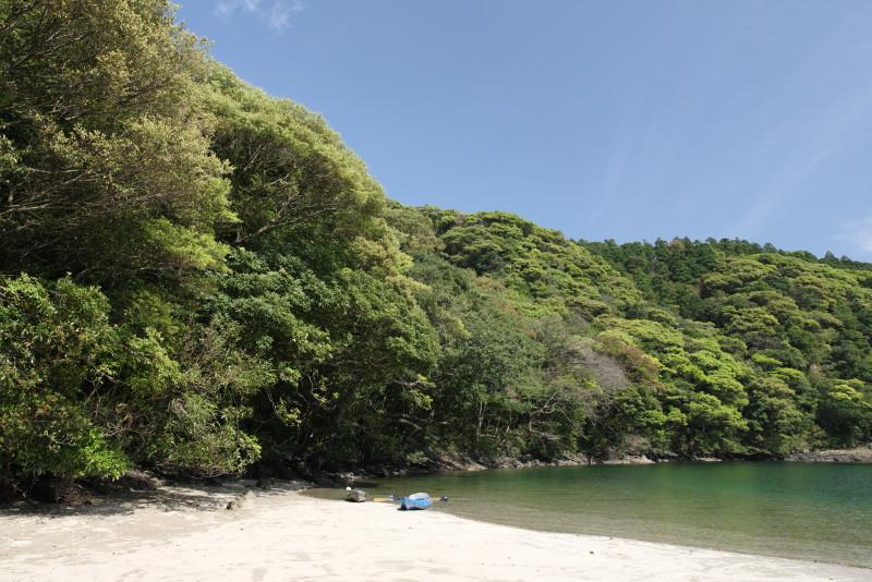 屋久島新緑の綺麗な砂浜
