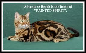 Painted Spirit