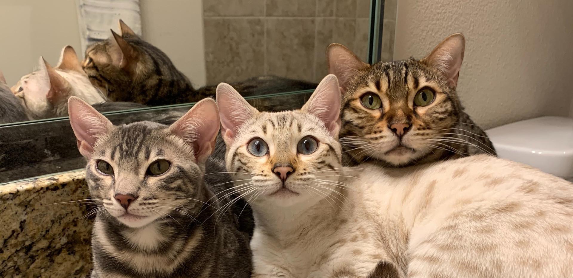 my trio