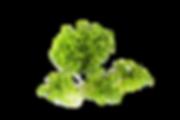 Green Oak.png