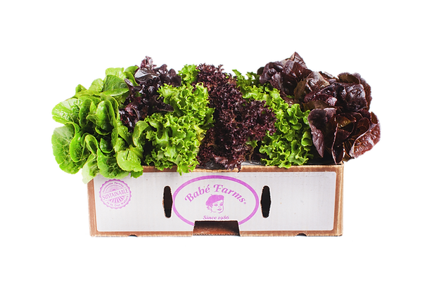 Baby Mixed Lettuce.png