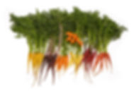 Mix Color Baby Carrots BF.jpg