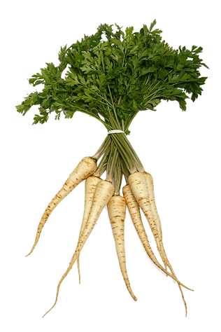 Parsley Root.png