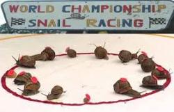 Snailracing-9900000451028a3c.png