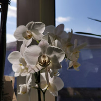 bouquet 9.jpg
