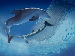 25-Dolphin Tale.jpg
