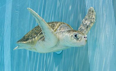 13-Turtles.jpg