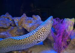 12-Moray Eel.jpg