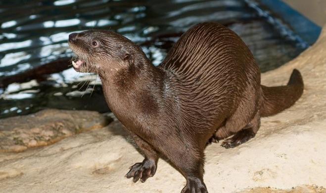 16-Otters.jpg