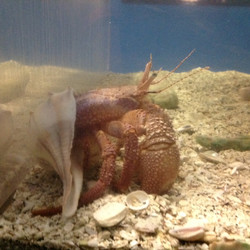 11-Hermit Crab.JPG
