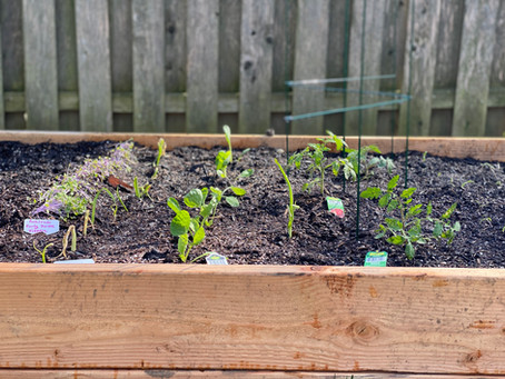 How to Build A Raised Garden Bed From Scratch At Home!