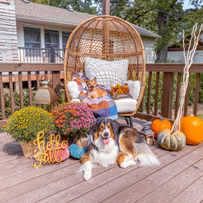 Fall Egg Chair Style - How To Patio Décor