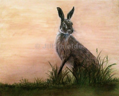 Darcy Hare (3)_marked.jpg