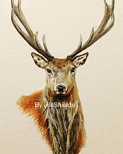 Red stag,  Acrylic on canvas #scottishar