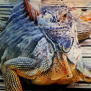 Iguana Kite