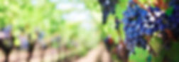 uvas.jpg