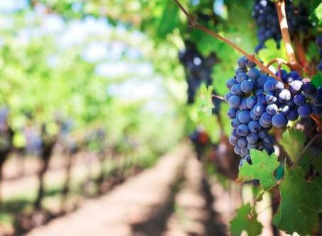 Los 7 valles vitivinícolas de Chile que no puedes dejar de visitar
