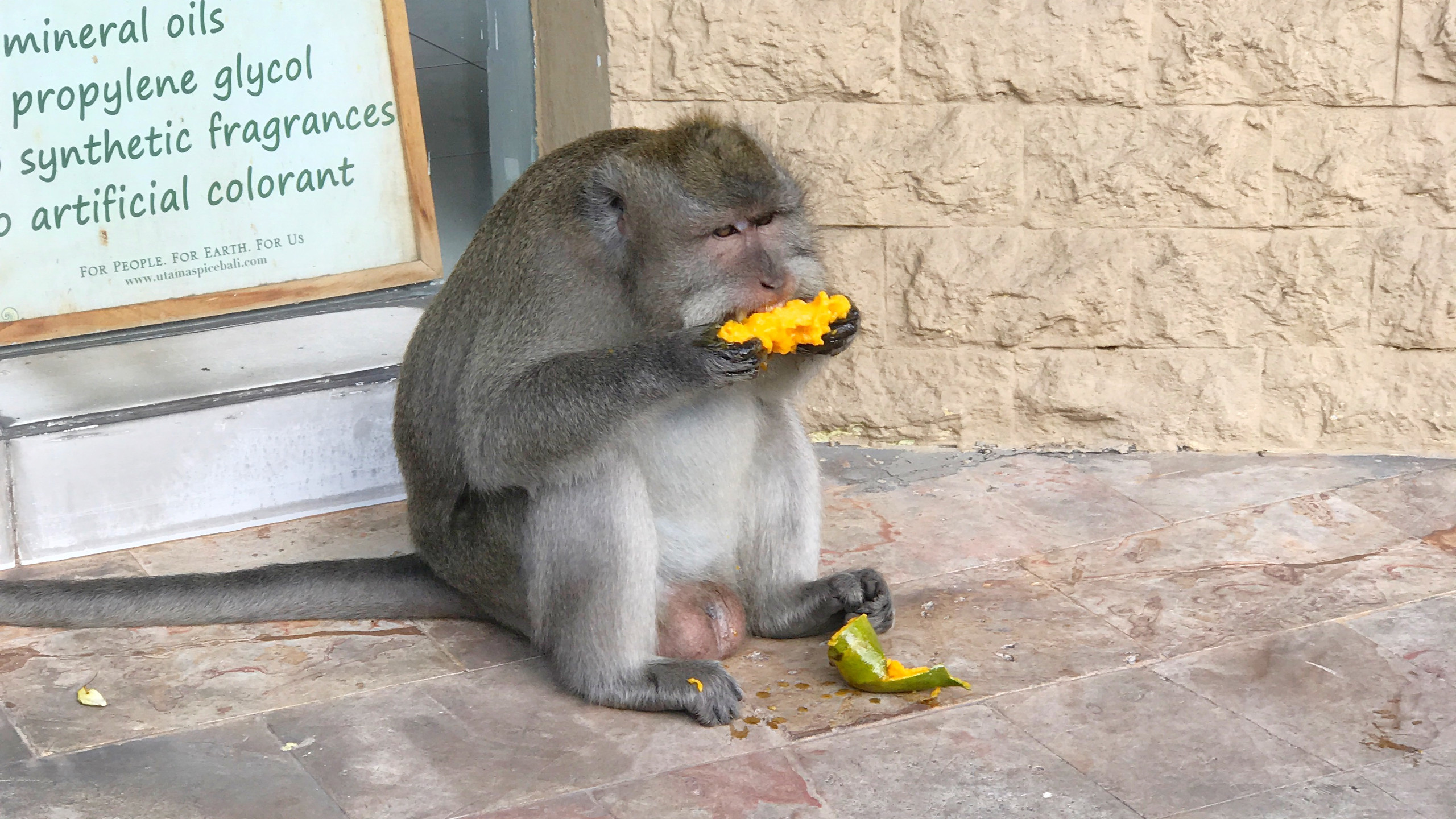 & apparently they like Mangoes?