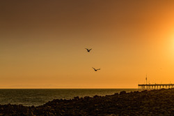 Birds Over Ventura Pier Fantomfoto-1