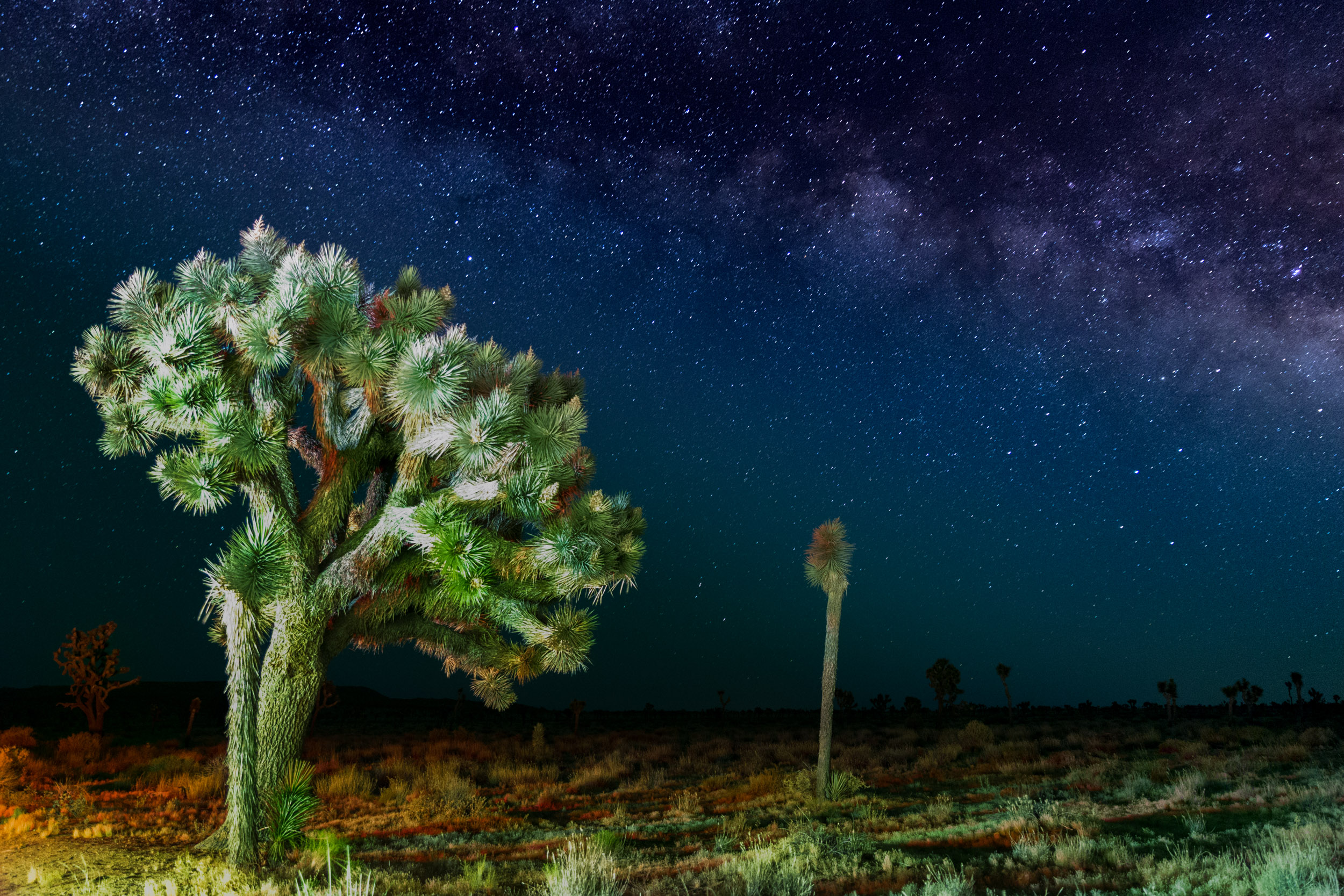 Joshua Tree Milky Way-1