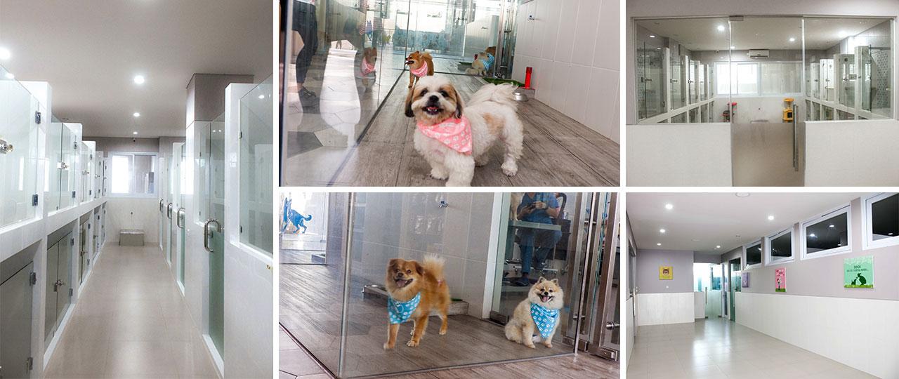 Pet Daycare & Boarding