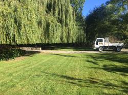 Gardener Queenstown Willows