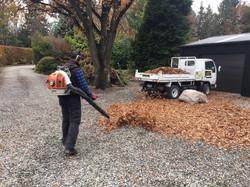 Gardener Queenstown Clearing Leaves