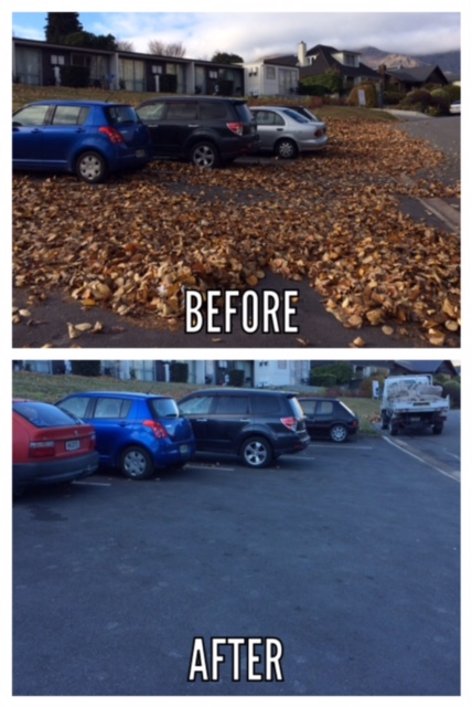 Claraden Mews Leaves
