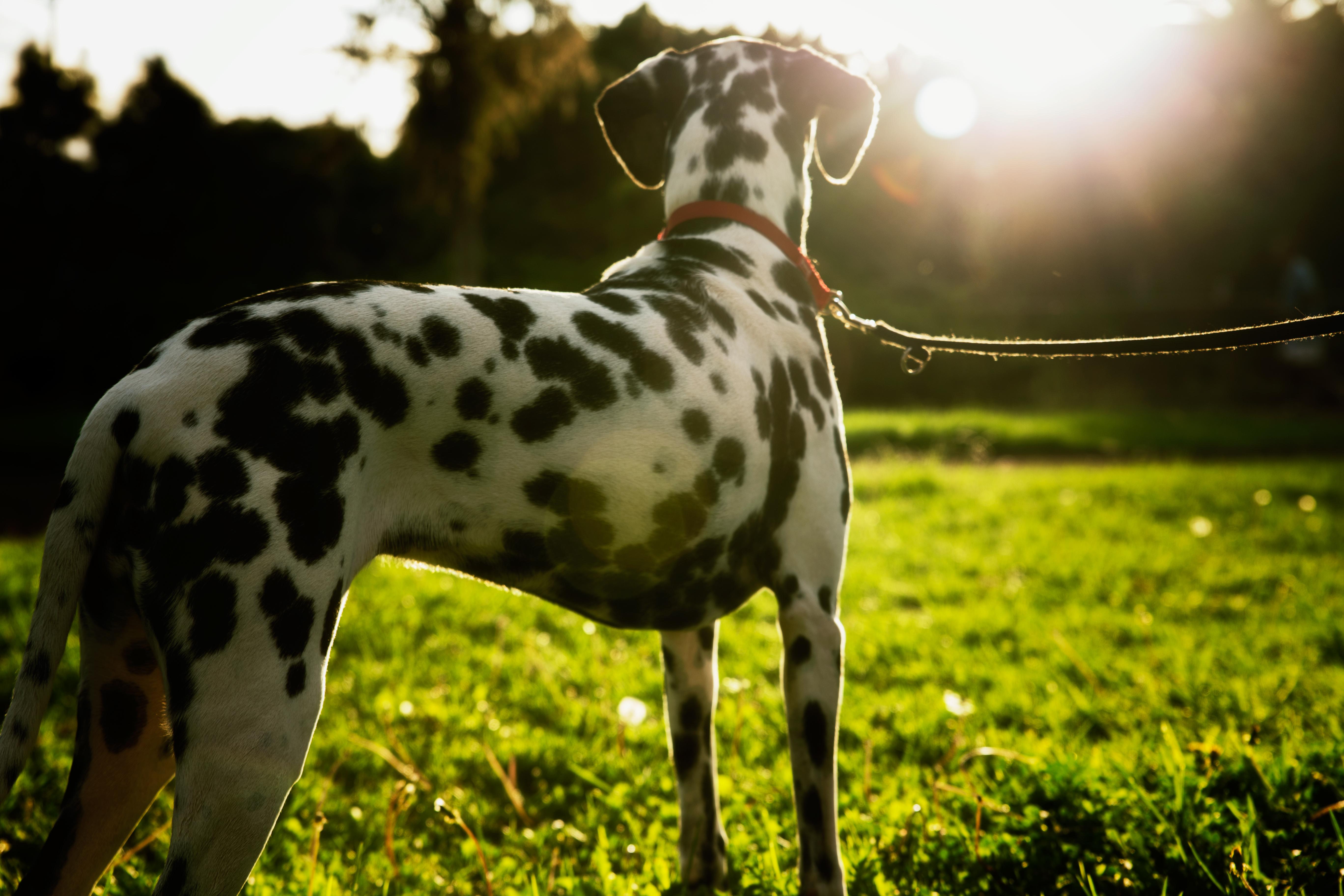 Thr dog and the sun