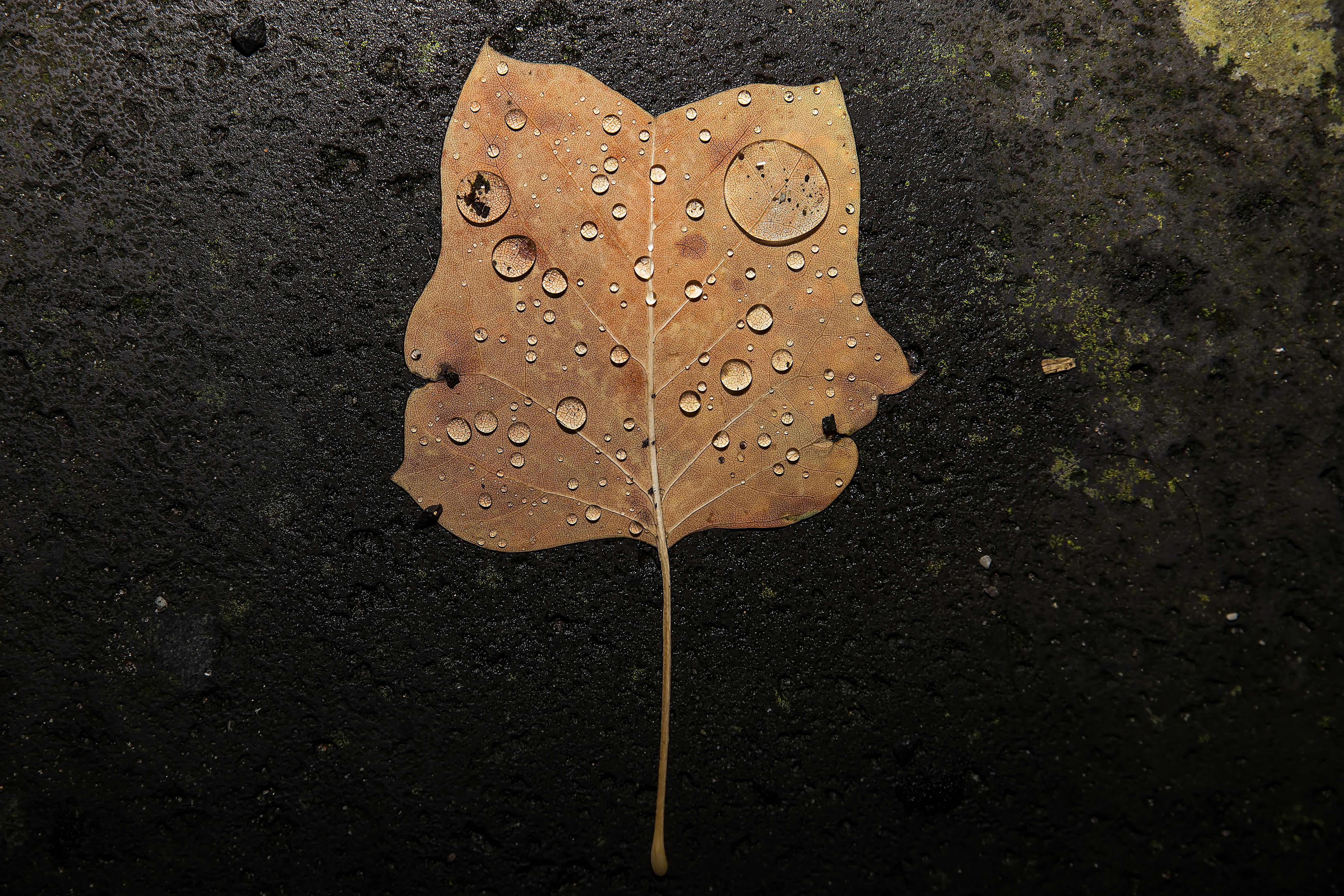 Autumn and the rain