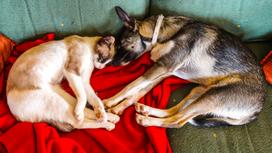 Guía Para el Buen Descanso de Su Mascota