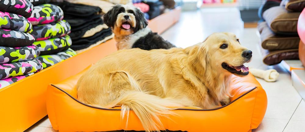 Varias camas para mascotas en una tienda por departamentos en Guatemala