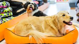 Como elegir una cama para tu mascota