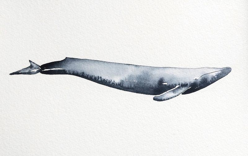 whalegray.jpg