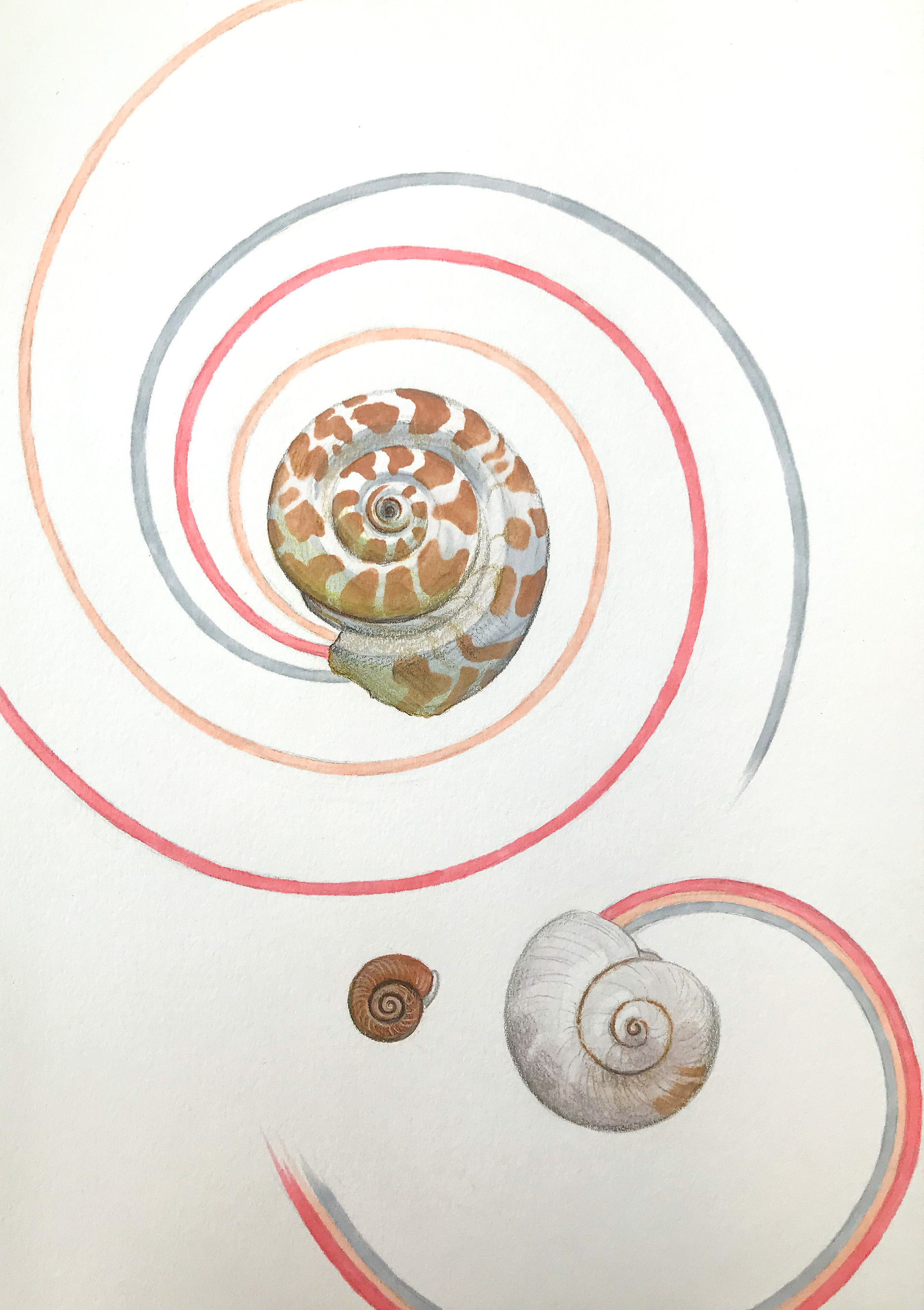 Tide Pool Marker and Colored Pencil 2021