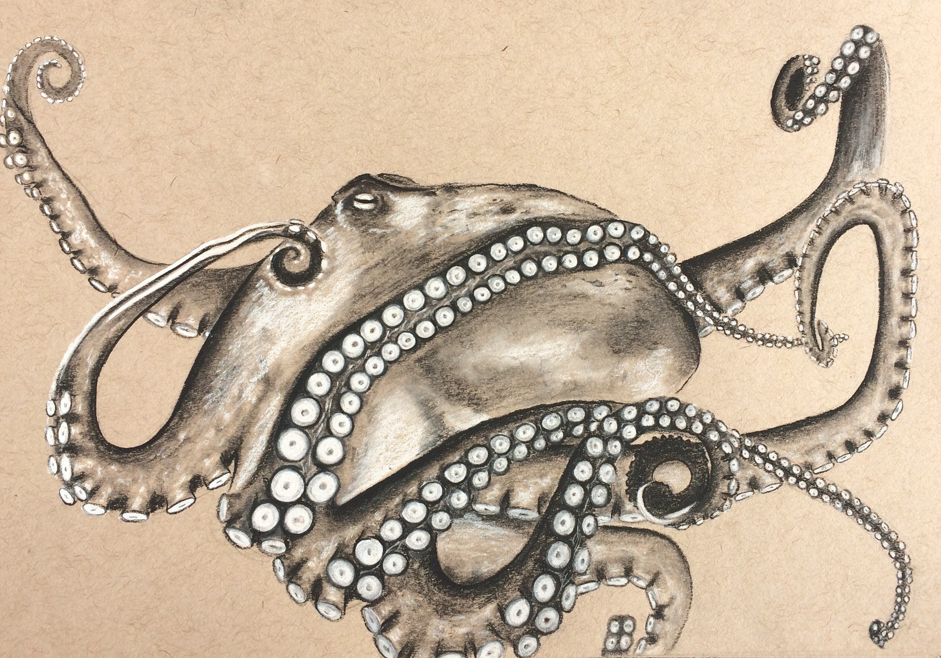 Octopus Charcoal 2017