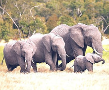 animals-elephant-wallpaper-preview_edited_edited.jpg
