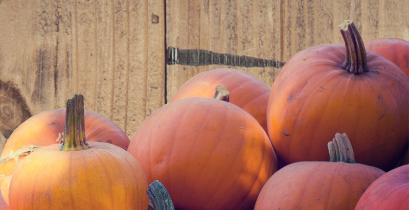 Pick Your Pumpkin and Your Homesite at Lincoln Woods