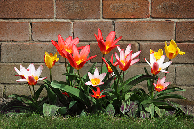 TH Properties Blog  I  Bright Tulips