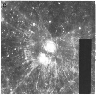Image credit : Paul G. Lucey et al. (2000)