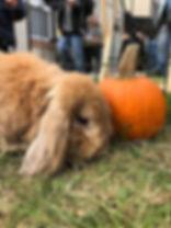 Winsor and pumpkin.jpg