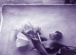 Flower color wash