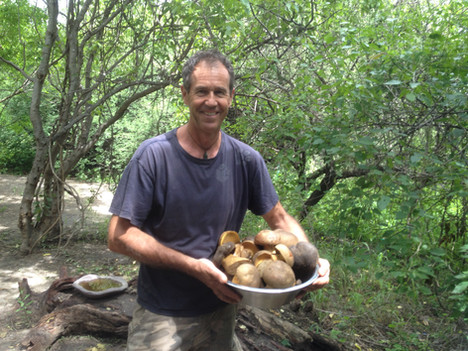 Marc successfully found KG of Anthill mushrooms.