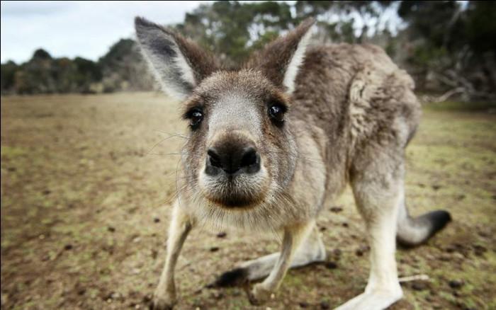 Tô na Austrália