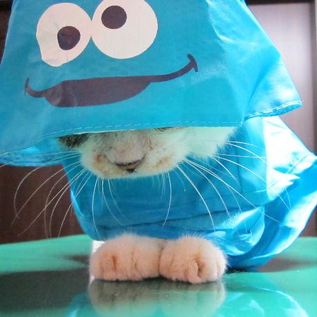 cat''.JPG