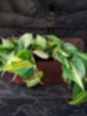 pottet-plants-4.jpg